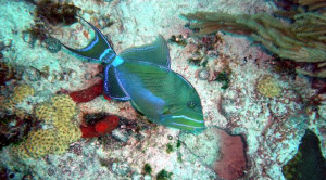 colorful fish on scuba vacations
