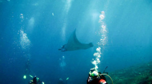 scuba diving liverboard vacations